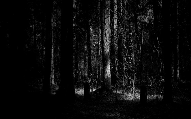 پناه بر جنگل خدا1